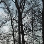 Naked tree sky